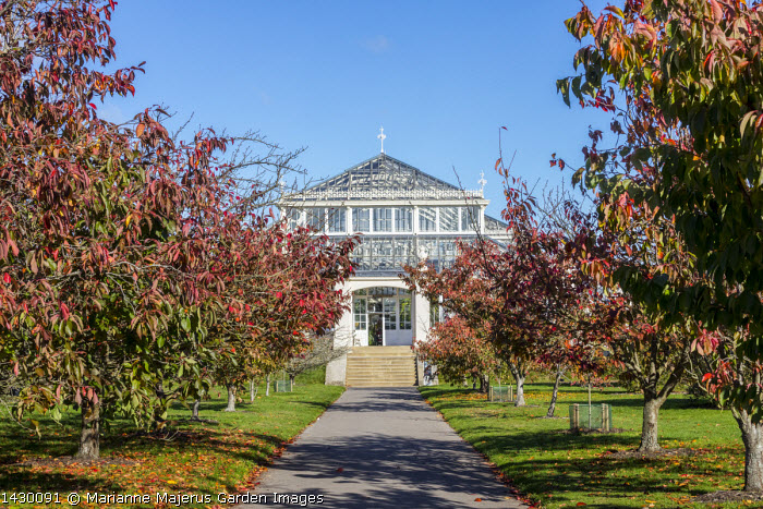 Cherry Walk leading to Temperate House