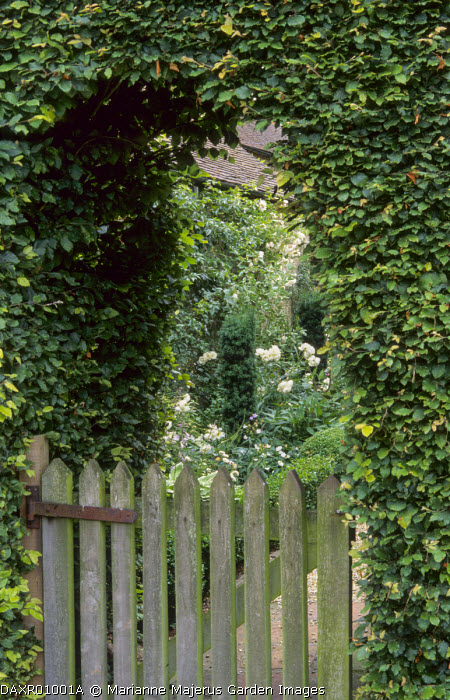 Arch in beech hedge, gate, view into garden