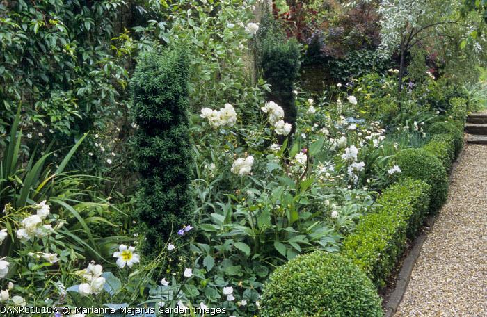 White border, roses, yew, box edging, gravel path
