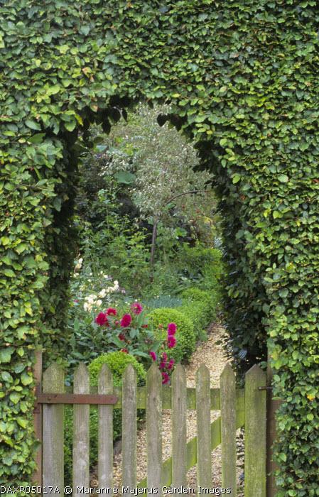 Arch in beech hedge, wooden gate, dahlia