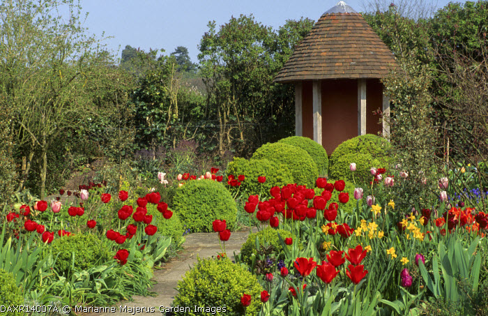 Paved path to summerhouse, borders with Tulipa 'Red Shine'