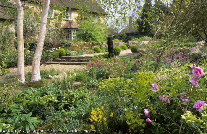 View to house, Camellia x williamsii 'Donation', hellebores, narcissi, Betula utilis var. jacquemontii stems, Prunus tenella 'Fire Hill'