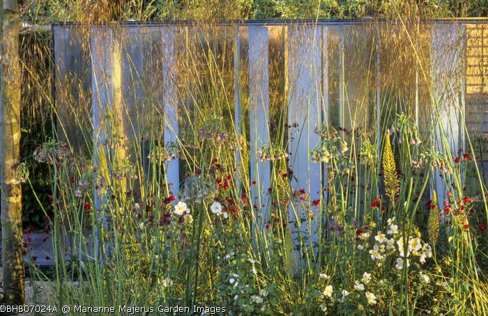 Stipa gigantea, Knautia macedonica, roses, Nectaroscordum siculum, glass screen