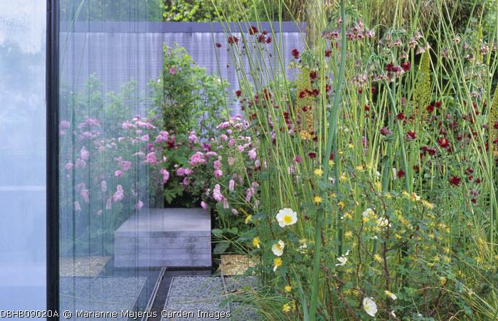 Stipa gigantea, roses, Nectaroscordum siculum, Knautia macedonica, glass screen
