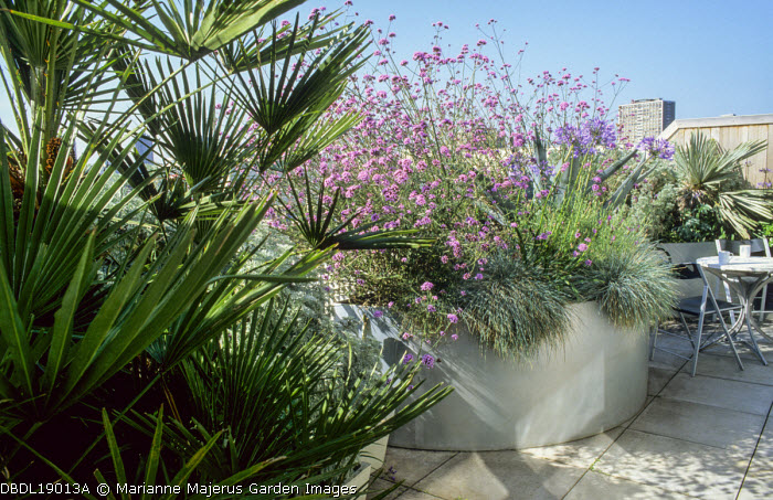 Balcony, galvanized containers with Trachycarpus fortunei, Verbena bonariensis and agapanthus, Festuca glauca, table and chairs