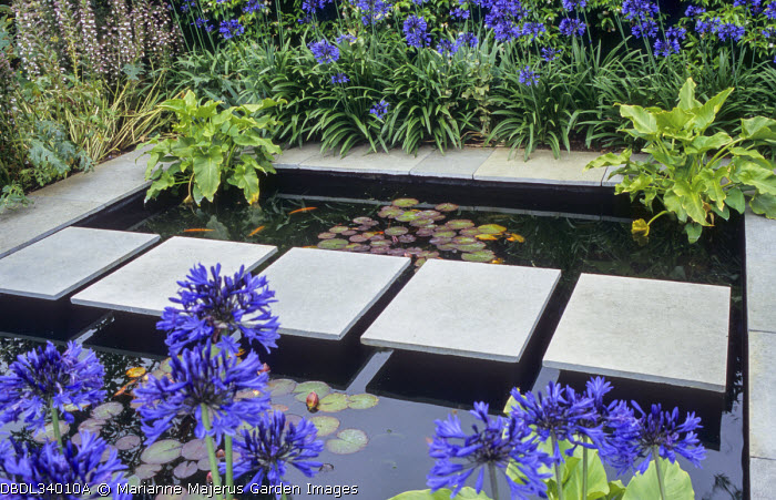 Stepping stone path across square pond, waterlilies, agapanthus