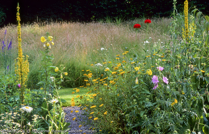 Path leading to wildflower meadow