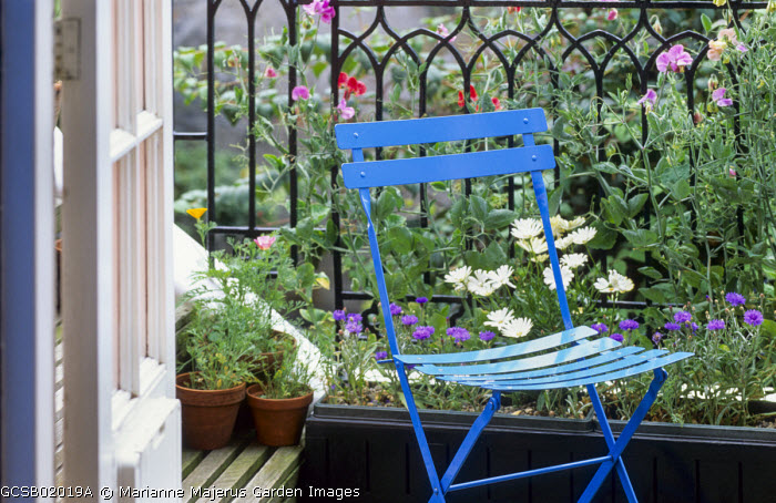 Balcony with decking, blue metal chair, sweet peas in trough climbing on railing