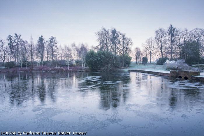 View across frozen lake to winter garden, Cornus alba 'Sibirica', Betula utilis var jacquemontii