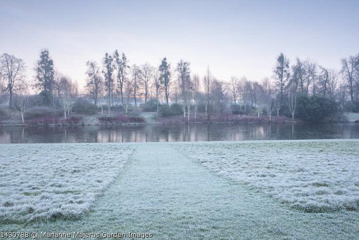 View across frozen lake to winter garden, Cornus alba 'Sibirica', Betula uitilis var jacquemontii, mown lawn