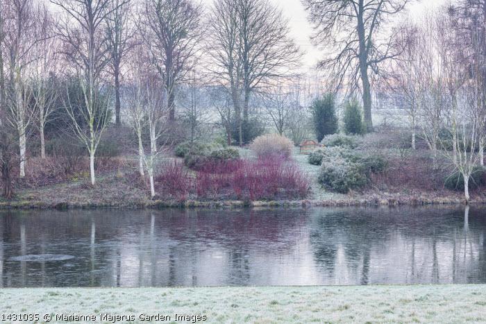 View across frozen lake to winter garden, Cornus alba 'Sibirica', Betula uitilis var jacquemontii, wooden bench