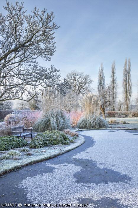View across frost on frozen pond, Cornus sanguinea 'Midwinter Fire', Cortaderia selloana, epimedium foliage, wooden bench