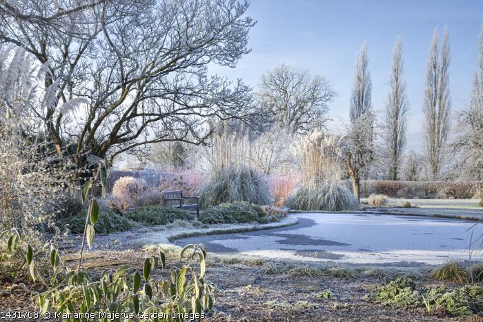 View across frost on frozen pond, Cornus sanguinea 'Midwinter Fire', Cortaderia selloana, euphorbia, bench, stepping stone path, Lonicera x purpusii, epimedium foliage, Magnolia x soulangeana