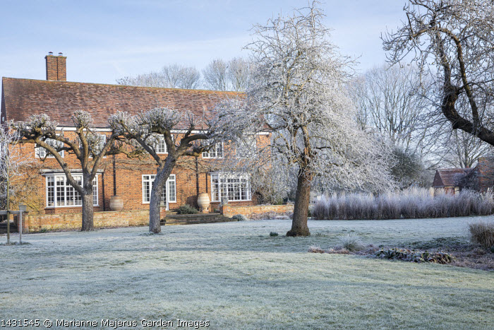 Fruit trees in front of house, frosty lawn