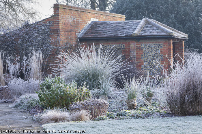 Brick and flint outbuilding, sedum seedheads in frost, winter wrapping, Pennisetum macrourum