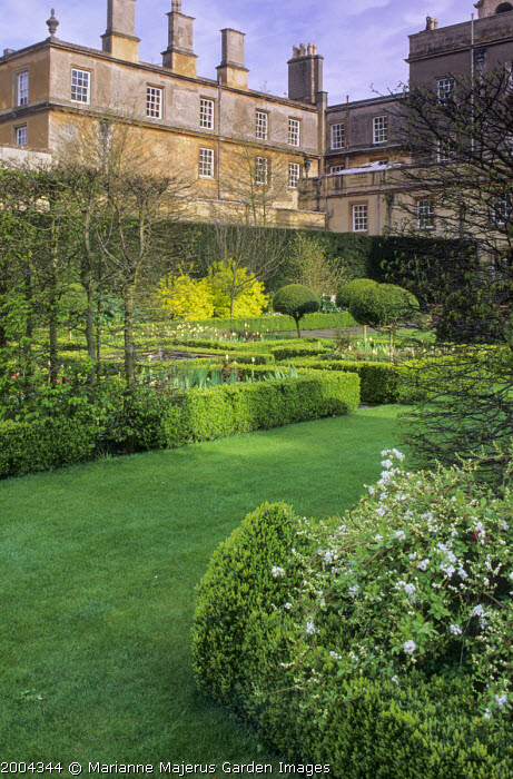 View to formal box parterre, tulips