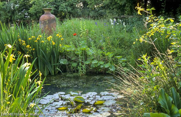 Waterlilies in natural pond, Iris pseudacorus, amphora