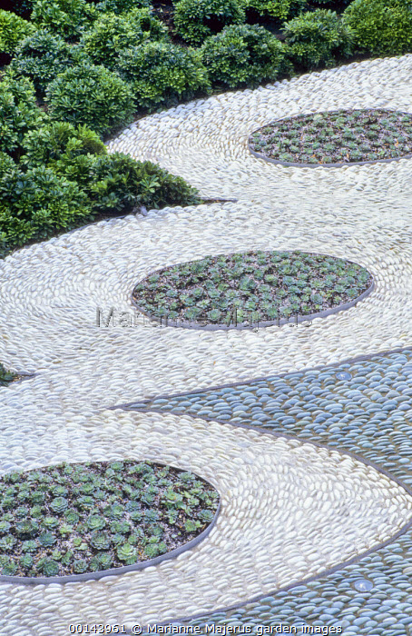 Contemporary urban courtyard, pebble mosaic, Echeveria elegans