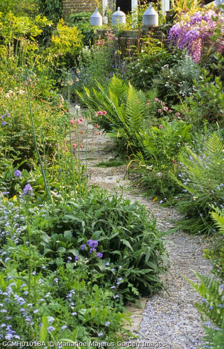 Gravel path through cottage garden, wall with chicken feeders and wisteria, Aquilegia vulgaris, Nectaroscordum siculum
