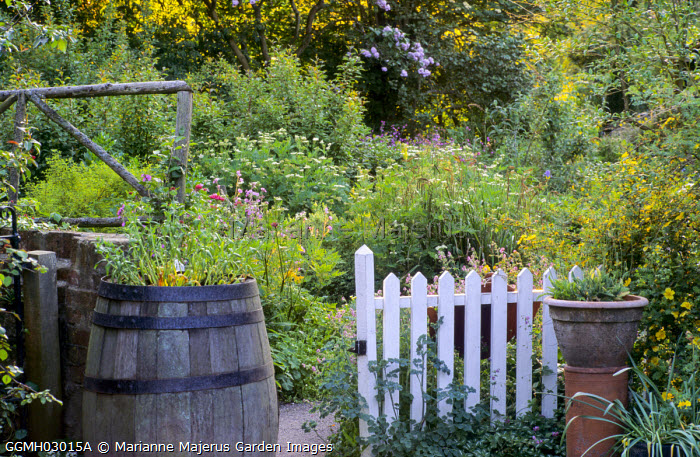 White painted picket gate, wooden barrel, rustic fence, cottage garden
