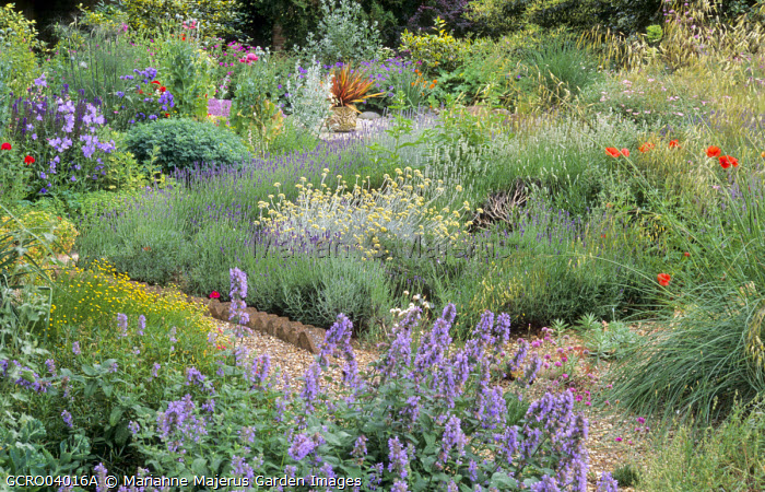 Gravel garden, helichrysum, lavender, poppies