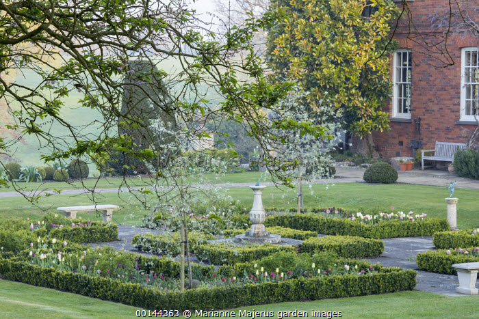 Sundial in formal box-edged parterre, stone bench, tulips