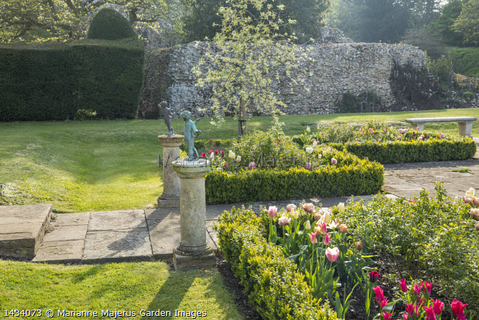 Tulips in formal box-edged parterre, stone bench, tulips, stone path