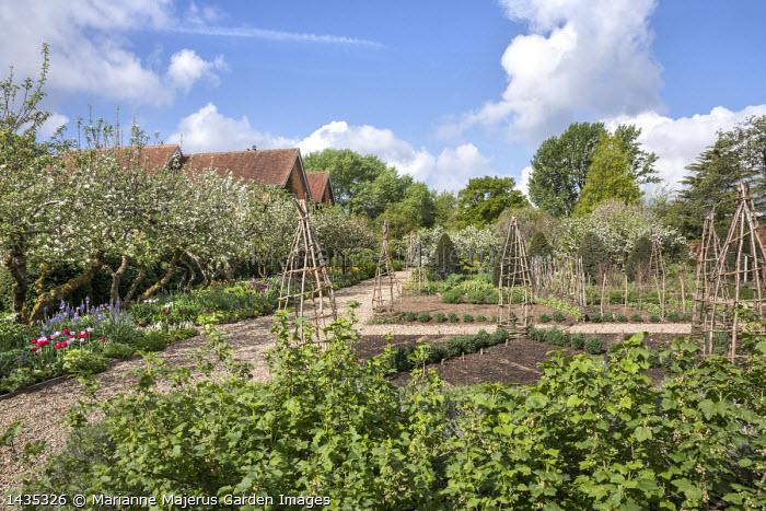 Redcurrant bushes, woven willow obelisks in border, apple blossom