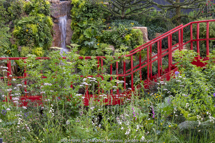 Valeriana officinalis, Libertia grandiflora, red painted bridge, Sambucus nigra, Digitalis purpurea, Gunnera manicata, waterfall