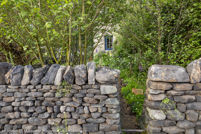 Dry-stone wall, path leading to house, Acer campestre
