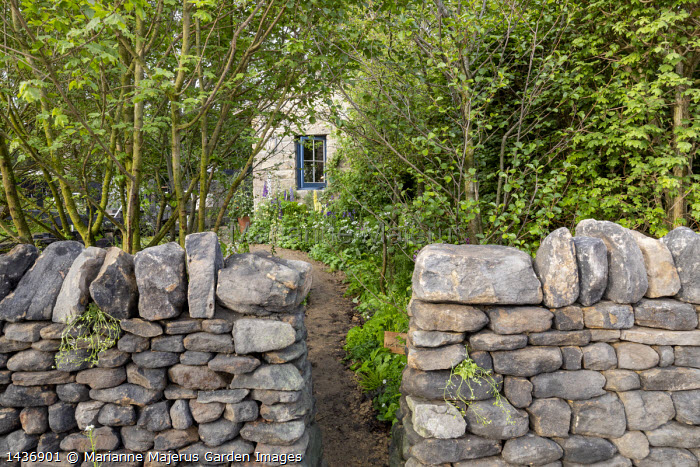 Dry-stone wall, path leading to cottage, Acer campestre