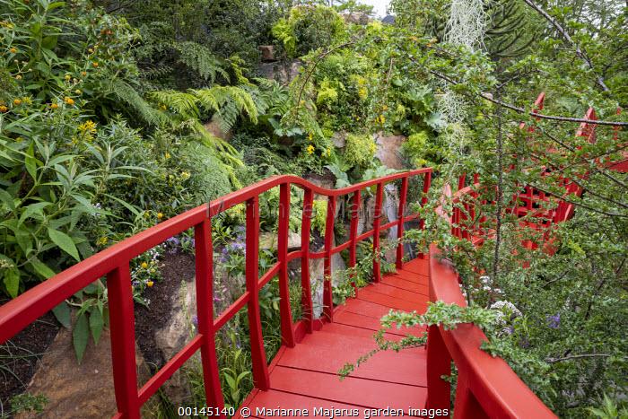 Red walkway by rock face, Buddleja globosa, Nothofagus antarctica, Lophosoria quadripinnata, waterfall