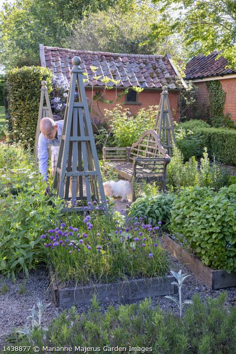 Wooden bench in herb garden, wooden obelisks, Salvia officinalis, Allium schoenoprasum, mint, lavender