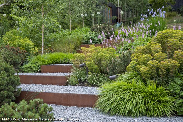 Cor-Ten steel-edged gravel steps, Euphorbia × martini, Geranium 'Rozanne', Pinus mugo, Persicaria bistorta 'Superba', Hakonechloa macra