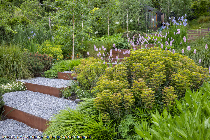 Euphorbia × martini, Persicaria bistorta 'Superba', Iris sibirica 'Perry's Blue', Betula pendula subsp. pendula 'Zwitsers Glorie', Pinus mugo, Hakonechloa macra, Cor-Ten steel-edged steps