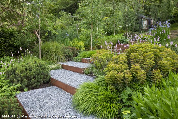 Euphorbia × martini, Persicaria bistorta 'Superba', Betula pendula 'Swiss Glory', Pinus mugo, Hakonechloa macra, Cor-Ten steel-edged steps