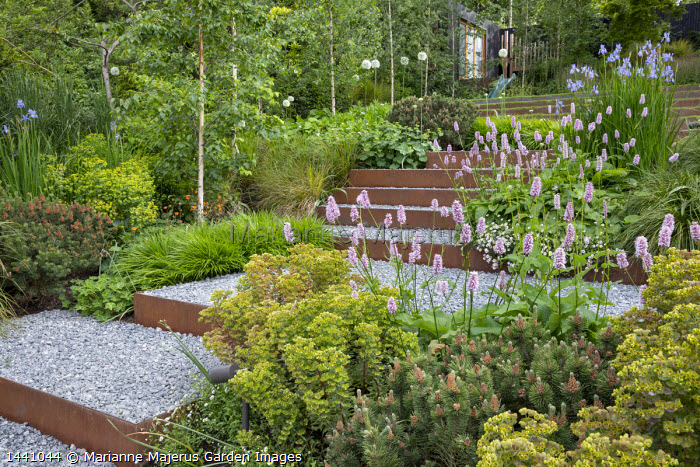 Euphorbia × martini, Persicaria bistorta 'Superba', Iris sibirica 'Perry's Blue', Betula pendula 'Swiss Glory', Pinus mugo, Hakonechloa macra, Cor-Ten steel-edged steps