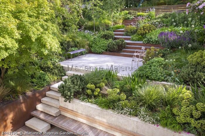 Terraced sloping garden, Cor-Ten steel edged steps, built-in wooden bench, Acer palmatum, Euphorbia x martini, Pinus mugo, Erigeron karvinskianus