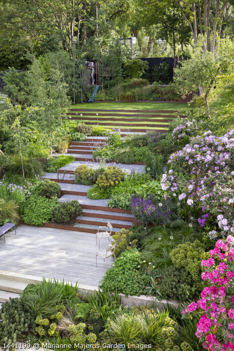 Terraced sloping garden, Cor-Ten steel edged steps, rhododendron, Euphorbia x martini, Pinus mugo, Geranium 'Rozanne', Persicaria bistorta 'Superba'