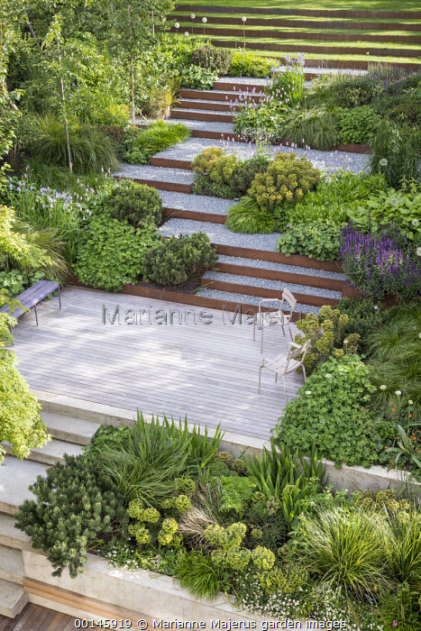 Terraced sloping garden, Cor-Ten steel edged gravel steps, Euphorbia x martini, Pinus mugo, Geranium 'Rozanne', Persicaria bistorta 'Superba'