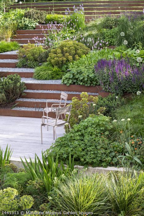 Chairs on decking, Geranium 'Rozanne', Salvia nemorosa 'Caradonna', Pinus mugo, Hakonechloa macra, Persicaria bistorta 'Superba', Euphorbia x martini, Cor-Ten steel edged gravel steps, alliums