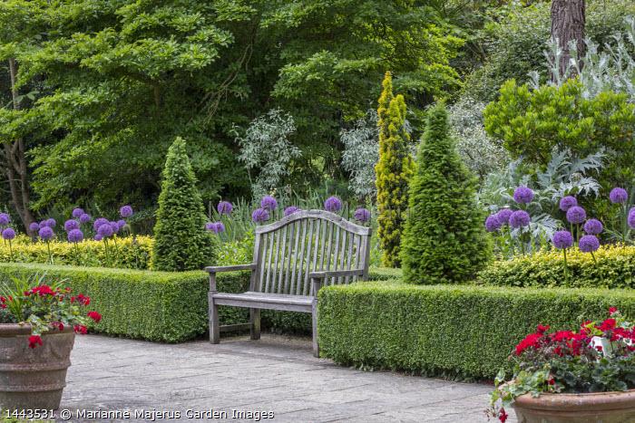 Stone terrace, low clipped box hedges, wooden bench, Allium 'Globemaster', clipped yew pyramids, Taxus baccata 'Fastigiata Aurea'