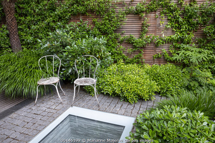 Hakonechloa macra, Pittosporum tobira 'Nanum', metal chairs on stone sett patio, skylight, Trachelospermum jasminoides, Schefflera taiwaniana