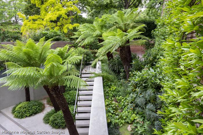 Dicksonia antarctica in urban garden, Pittosporum tobira, Euphorbia characias 'Portuguese Velvet', Epimedium × perralchicum 'Fröhnleiten', Trachelospermum jasminoides on wooden fence