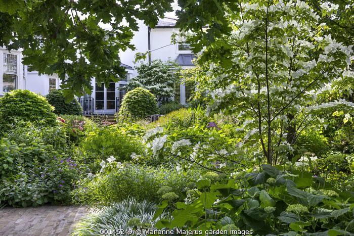 Cornus kousa, amsonia, Hydrangea arborescens 'Annabelle', beech domes