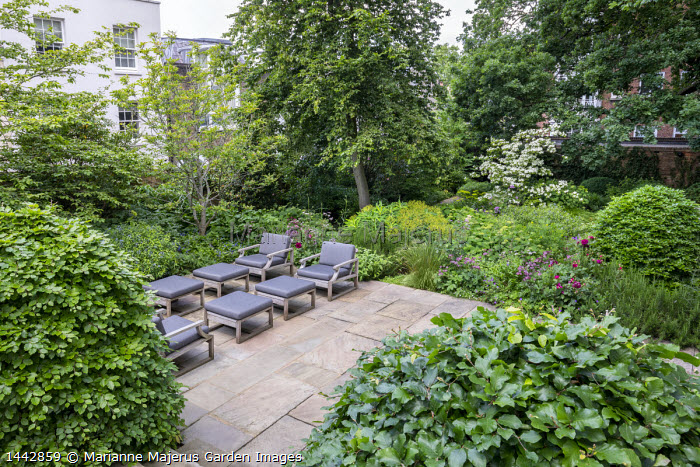 Contemporary chairs with cushions on stone terrace, large clipped Fagus sylvatica domes, astrantia, Hydrangea arborescens 'Annabelle', Euphorbia x pasteurii, Rosmarinus officinalis, Amsonia orientalis, Cornus kousa