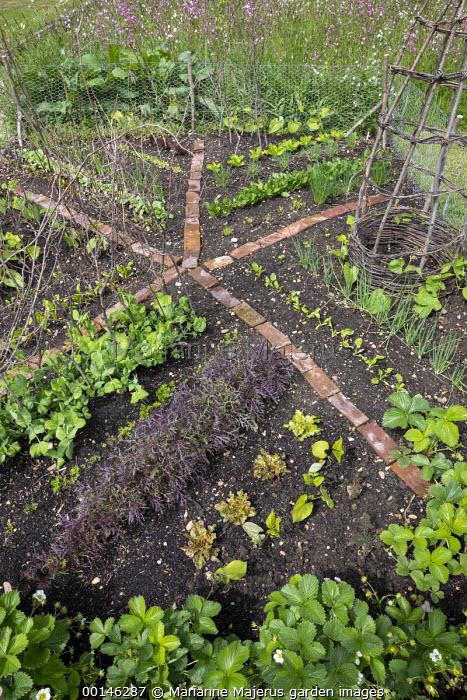 Salad leaves 'Purple Frills', Pisum sativum var. saccharatum 'Shiraz', strawberries, brick paths