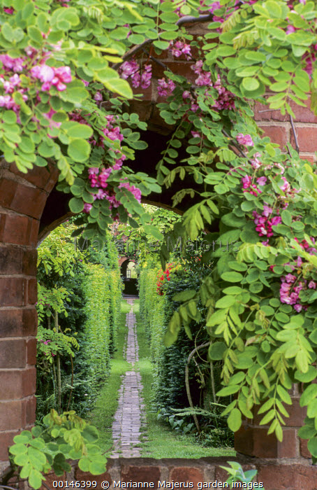 View through window in brick wall to path leading down hedge-lined avenue, Robinia hispida, garden 'rooms'