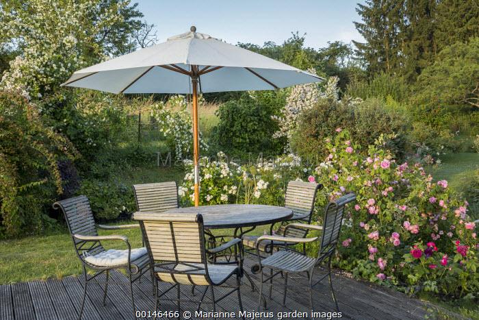 Table, chairs and umbrella on decking, Rosa 'Taxandria', Rosa 'Mid Summer Snow', Rosa 'Chapeau Napoléon' and Rosa 'Purple Lodge'
