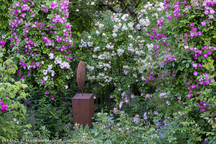 Rosa 'Hugo Maweroff' (Soupert & Notting 1910), Rosa 'Absolument Claude' (Lens Roses), Rosa 'Ghislaine de Féligonde', metal sculpture by Frank Maas
